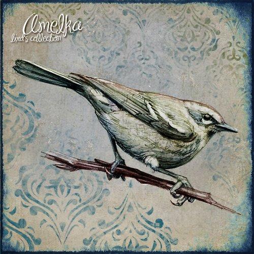 Ptačí kolekce obrázků - art 4