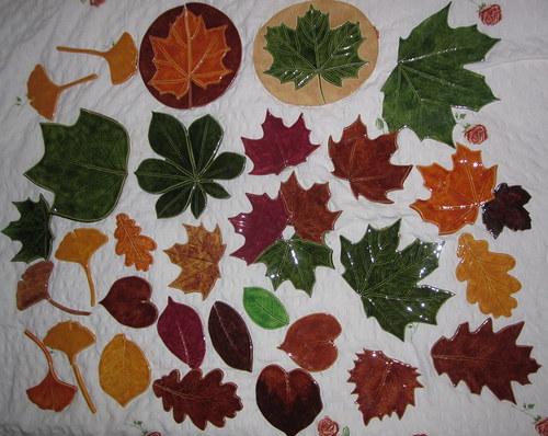 kouzlo podzimních listů