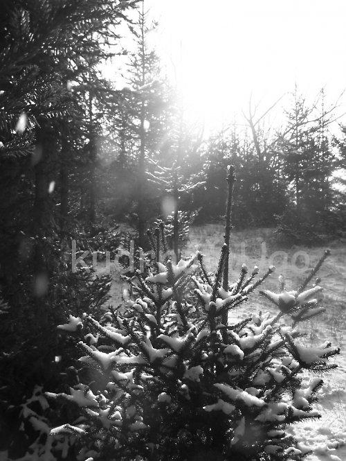 Zimní krajina....