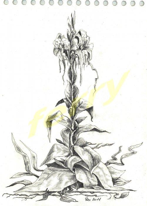fictional flowers