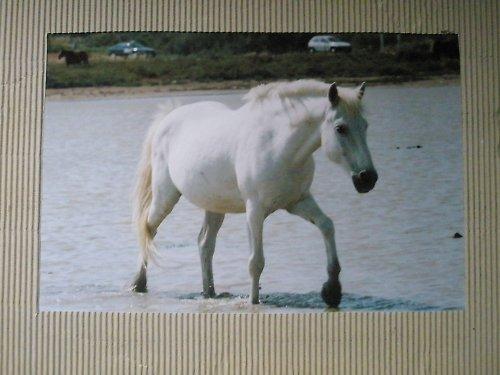 Z cyklu Krása koně..1