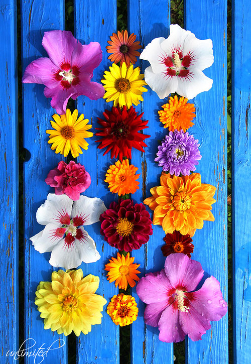 """Fotografie \""""Květinový obraz\"""""""
