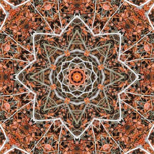 Mandala rezavého borůvčí