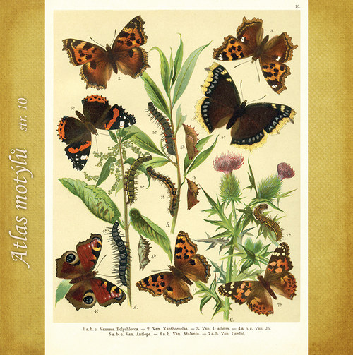 Motýli - str. 10