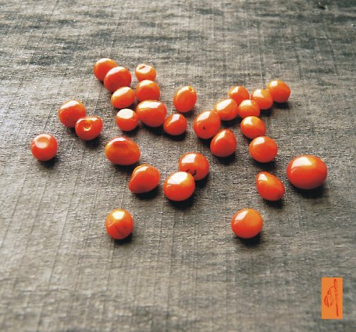 Oranžový korál nepravidelné kuličky, 5 ks