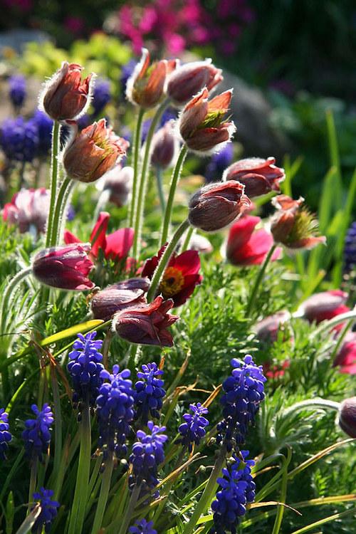 """Fotografie \""""Jaro na zahradě\"""""""