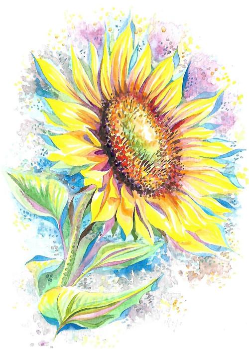 ...slunečnice...