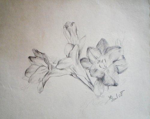 Květenství. Kresba.