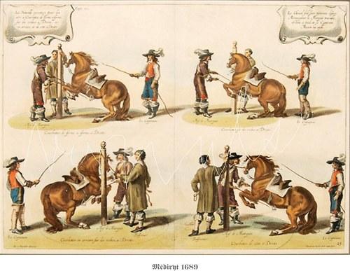 Výcvik armádních koní I