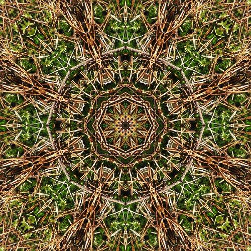 Mandala mechu a jehličí