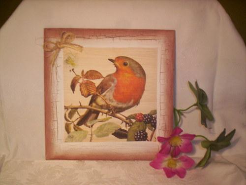 Ptáček  (Červenka) sedící na větvičce
