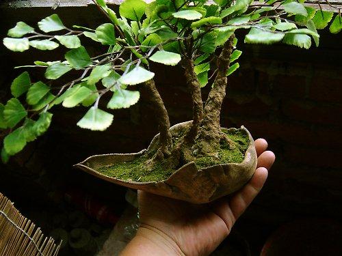 Lesíček ve skořepině od Lavender