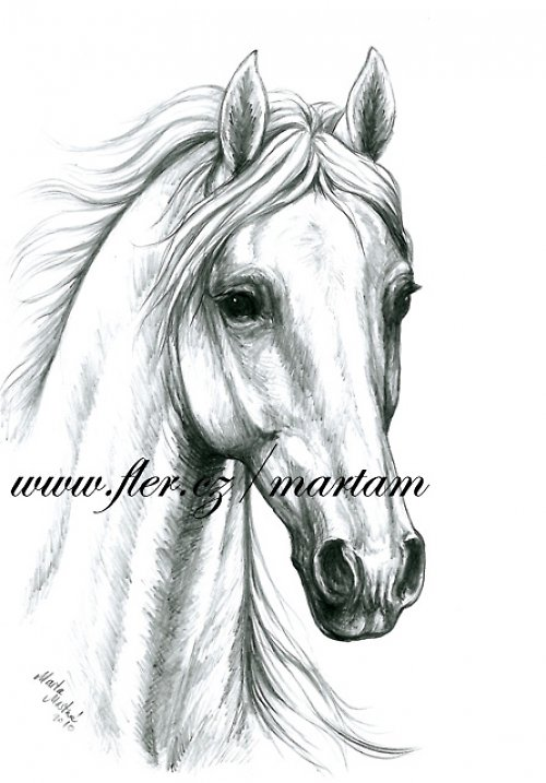 Rozevlátý kůň