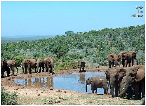 Sloni u jezera - autorská fotografie