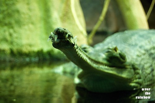 Pozor, krokodýl - autorská fotografie, sada 2 ks