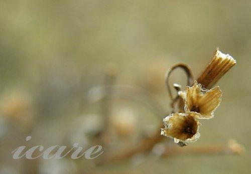 Suché květy