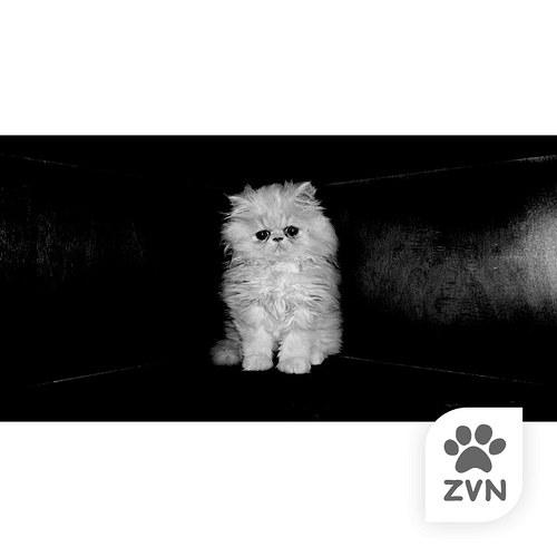 Kotě ve tmě