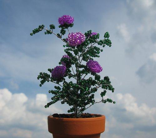 Fialové korálkové růže
