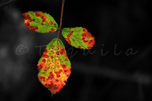 Vítám tě, podzime...