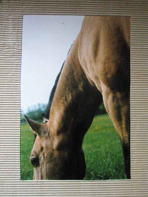 Z cyklu Krása koně..3