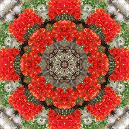 Mandala kvetoucích kaktusů