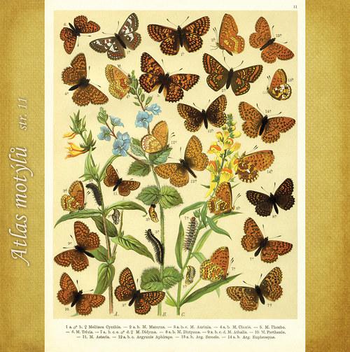 Motýli - str. 11 - formát A4