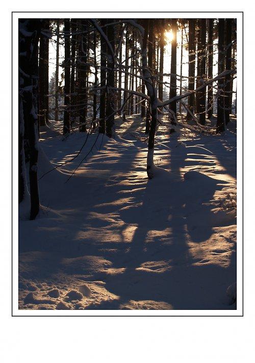 Zimní lesní