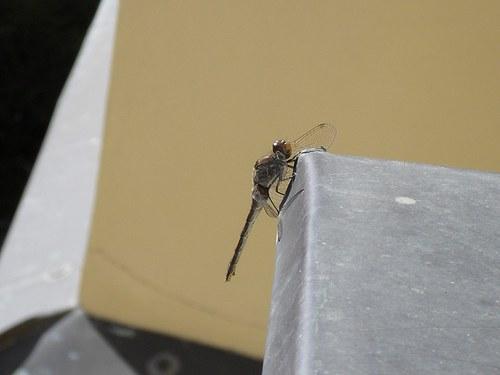 Váhavá vážka ve velkoměstě