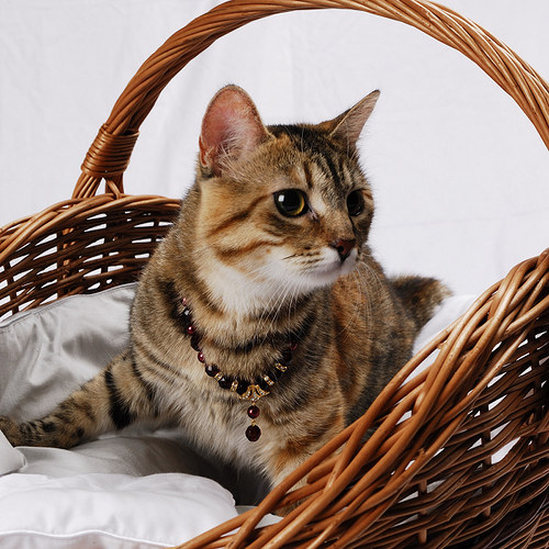 Červený kočičí klenot