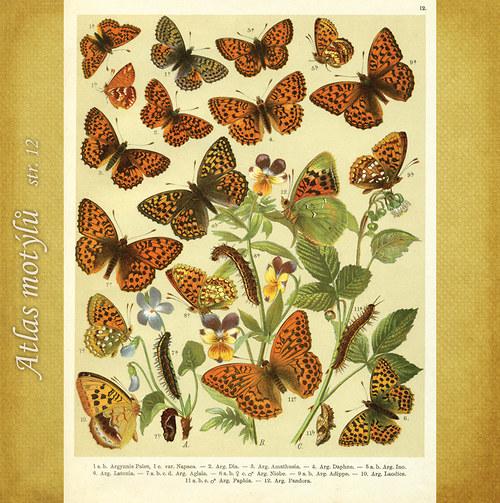 Motýli - str. 12 - formát A4