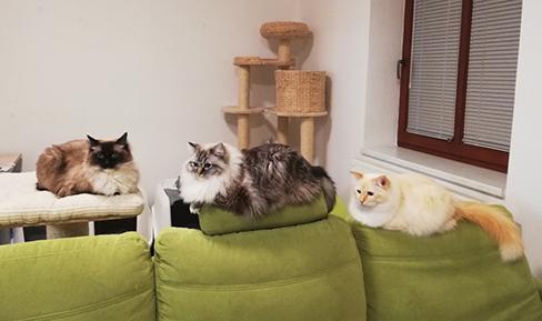 kočičí trio