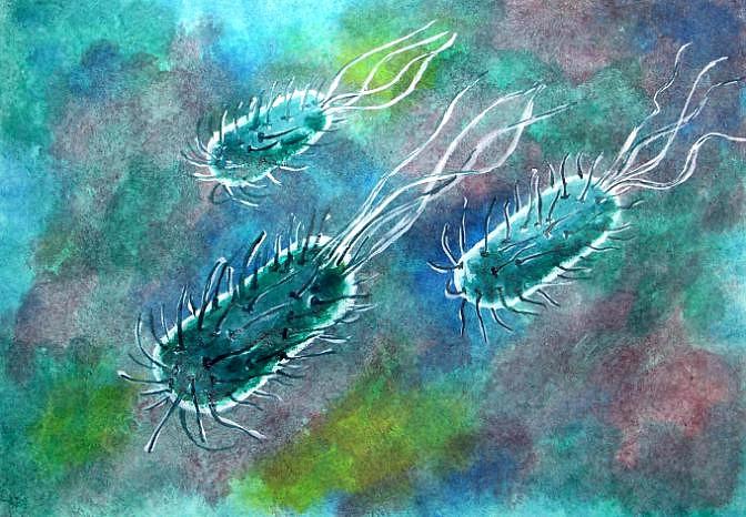Rozmar bacily rozmar iniciační proces divoký kmen