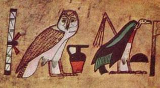 Sova egyptská
