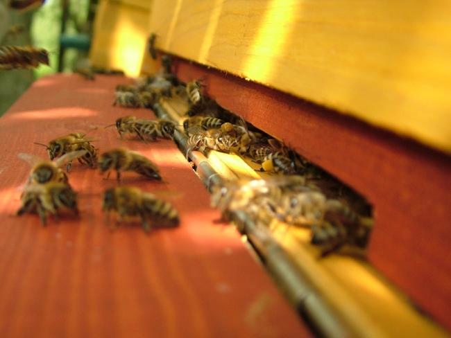 Včely, co s manželkou chováme