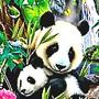 Panda24