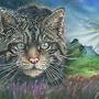 Obrázky Věry Kočky